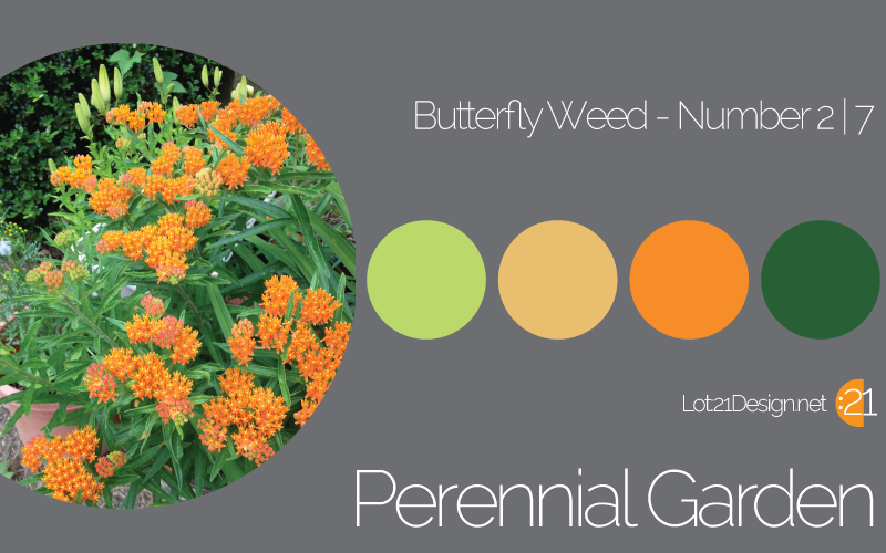 Perennial Garden Butterfly Weed - Palette 2