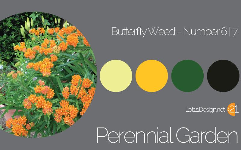 Perennial Garden Butterfly Weed - Palette 6