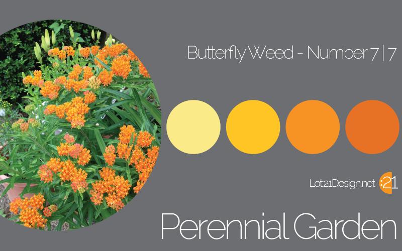 Perennial Garden Butterfly Weed - Palette 7