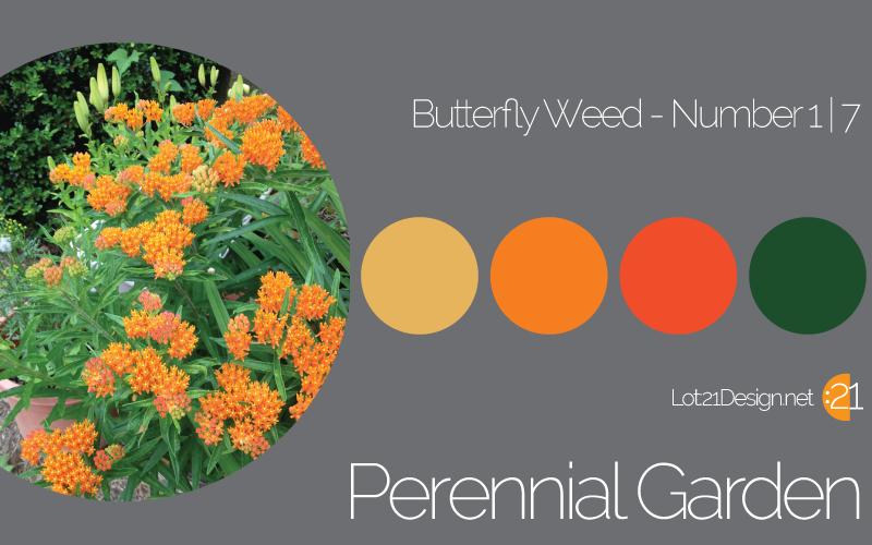 Perennial Garden Butterfly Weed - Palette 1