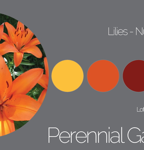 Lilies Palette Number 2 of 7