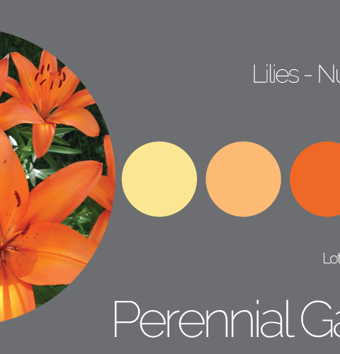 Lilies Palette Number 6 of 7
